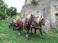 Čabraď - hradom sa niesol dupot konských kopýt